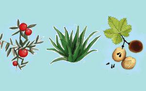 Plantas que ajudam no alívio das hemorroidas de forma natural