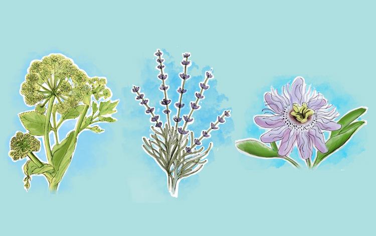 Plantas que ajudam a controlar a ansiedade de forma natural
