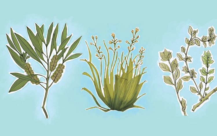 Plantas que ajudam a eliminar piolhos de forma natural