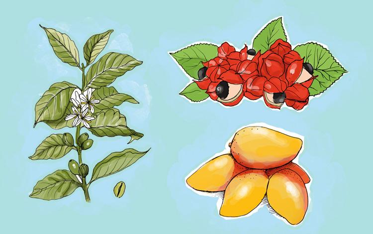 Plantas para emagrecer de forma natural e sem químicos