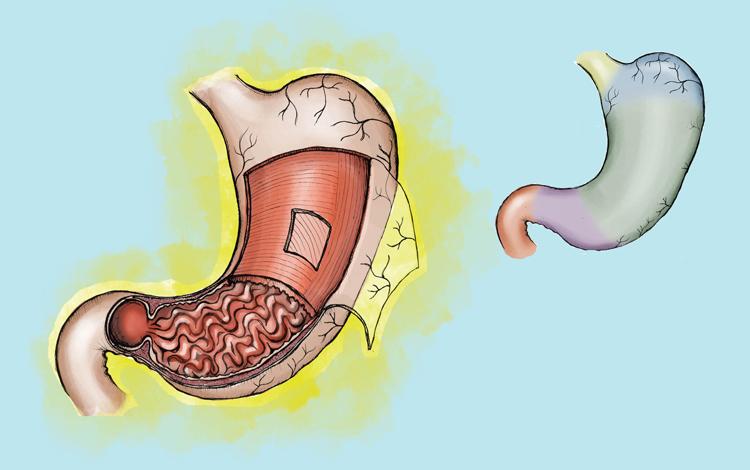 O estômago prepara os alimentos para serem absorvidos pelo organismo