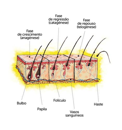 O cabelo tem um papel vital na nossa imagem e também ajuda a transmitir informação sensorial