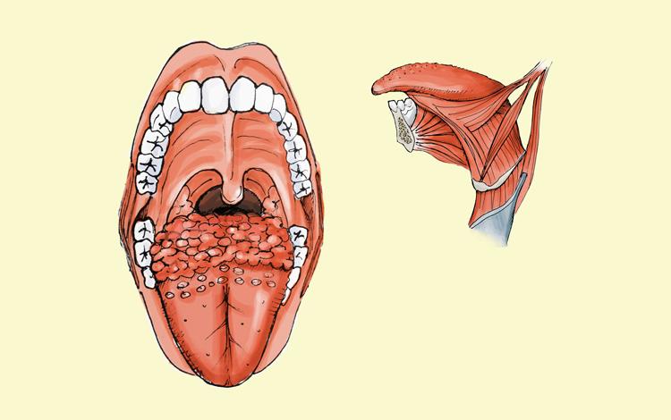 Os músculos que compõem a língua são importantes para a fala e a deglutição