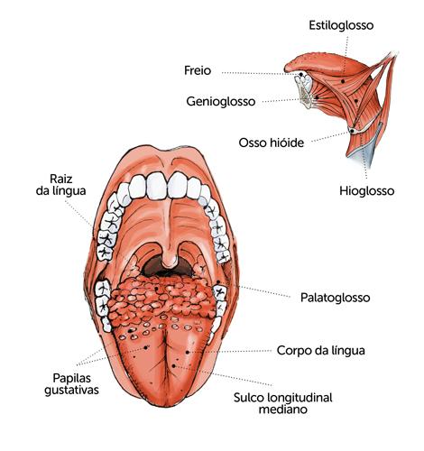 O tabaco e o álcool são os principais agressores da língua
