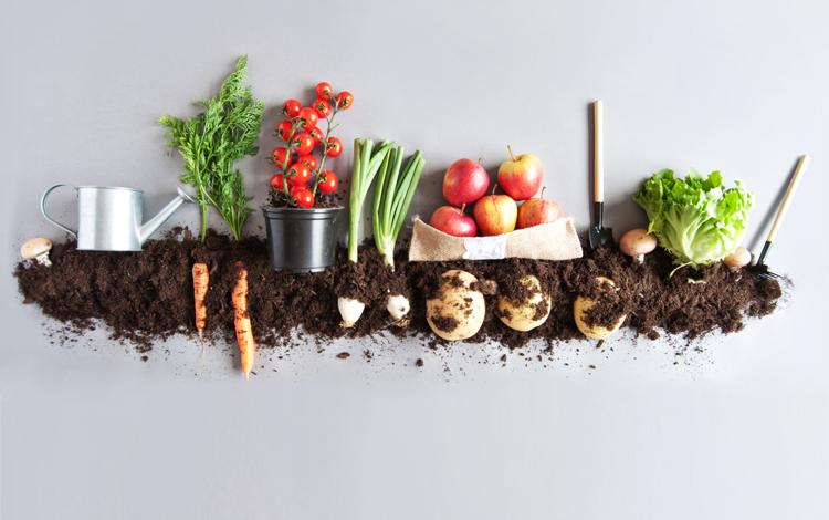 dieta demitariana: a dieta do planeta