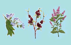 plantas para controlar a transpiração