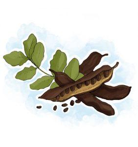 Plantas que ajudam a travar a diarreia: Alfarroba Ceratonia siliqua L.