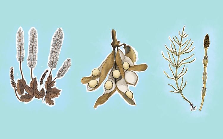 prevenir a osteoporose com a ajuda de plantas