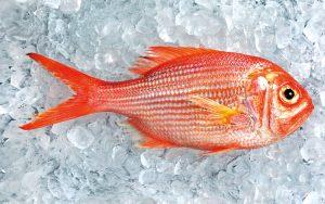 Peixe: aprenda a escolher bem