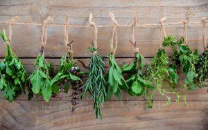 Ervas aromáticas: como usar, benefícios
